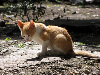 kitten, sitting, domestic, cute, young, kitty, feline