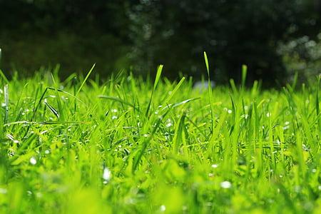tráva, zelená, Příroda, trávník, jaro, odstíny zelené, zelení
