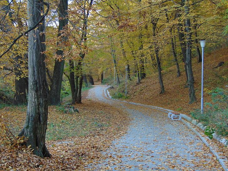 tardor, tardor, temporada, groc, bosc, camí, temporada de tardor