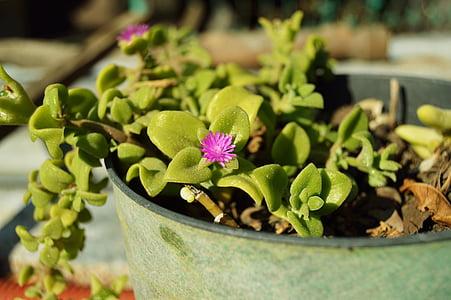 thực vật, lọ hoa, crock, màu xanh lá cây, Sân vườn, Hoa, Hoa