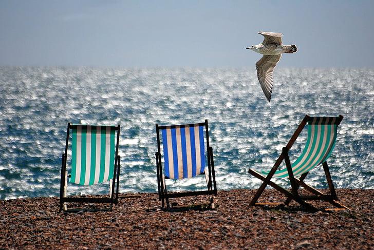 deckchairs, sea, beach, seaside, seagull, summer, bird