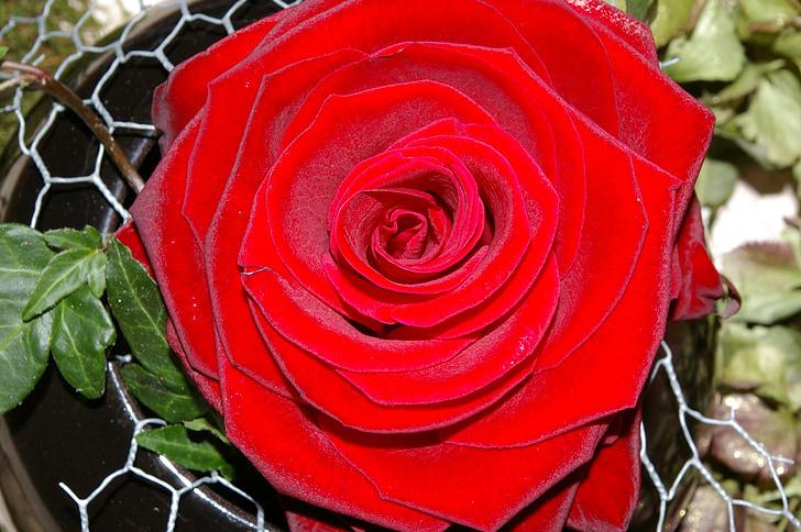 Rosa, rosa vermella, flor, flor rosa, fragància, bellesa, romàntic