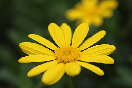 flor, fons, la micro