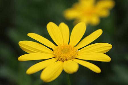 цвете, фон, микро