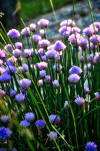 chives, herb, food, green, healthy, organic, fresh