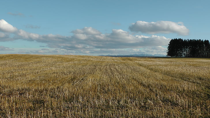 field, cornfield, clouds, nature, golden yellow