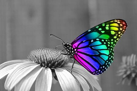 пеперуда, пеперуди, насекоми, насекоми, макрос, монарх, цвете