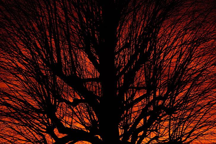 크라운, 미적, 일몰, 트리, 분기, 부족, 고독한 나무