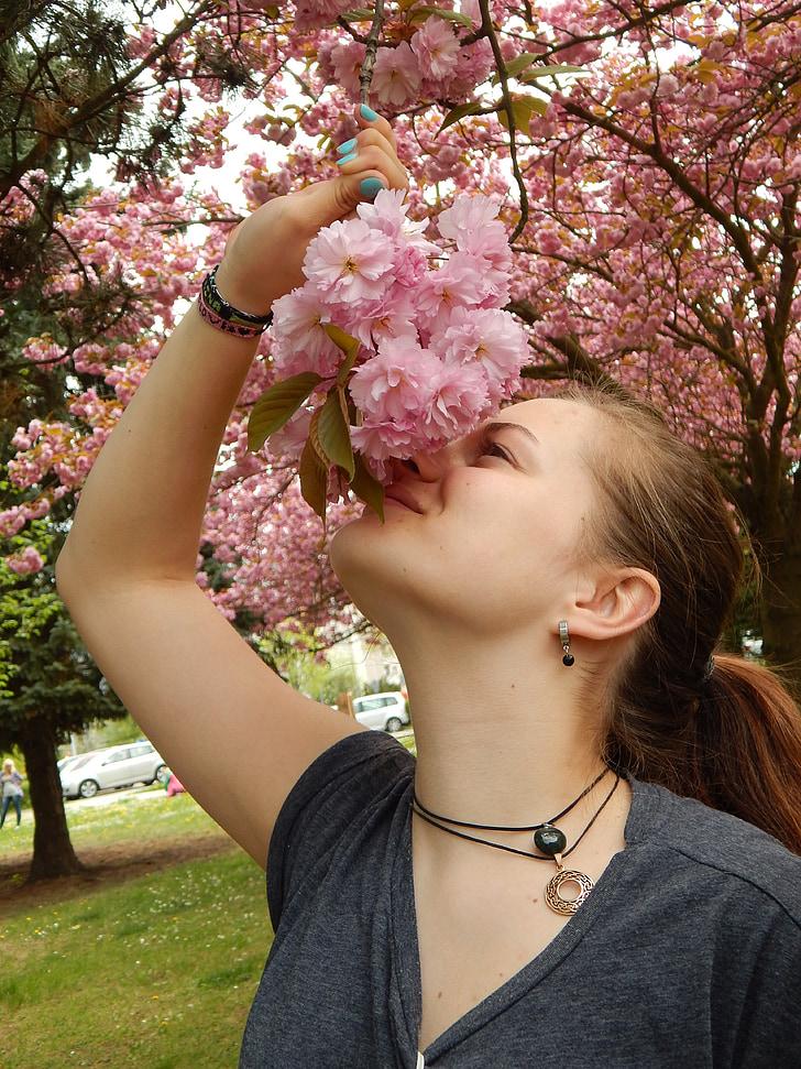kirsi õis, maitse, lilled, filiaali, Tüdruk, Tereza, kevadel