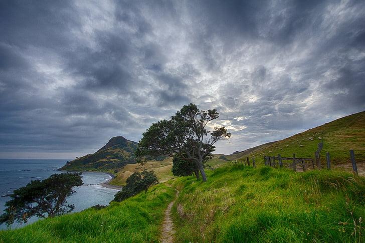 Nova Zelândia, caminho, trilha, Corum andel, ovelhas, caminhadas, nuvem - céu