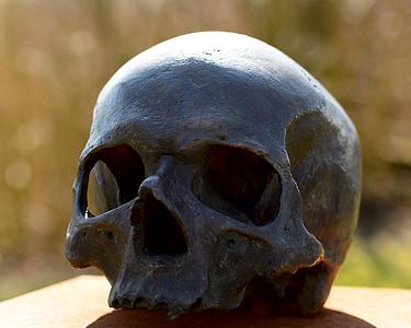skull and crossbones, skull, human, head, face, bones, death