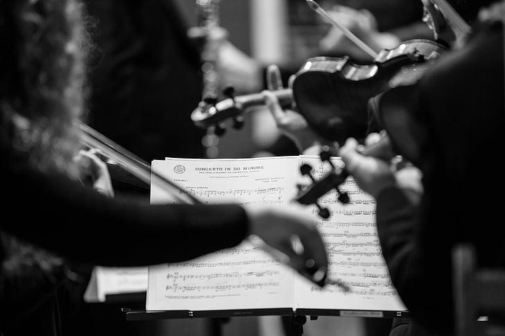concert, violins, concerto in d major for oboe, carlo romano, music, musical Instrument, musician