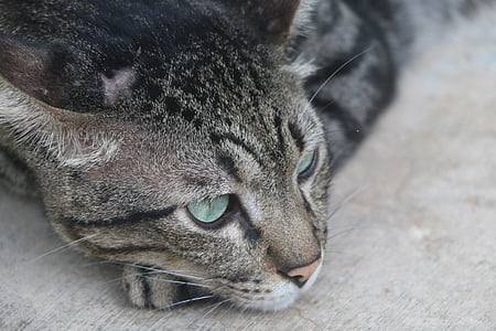 Slobodni izbliza maca