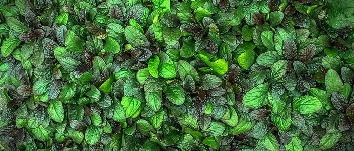 les fulles, plantes, hwalyeob, natura, verd, resum, estat de la Unió