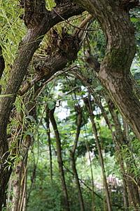 trees, arc, vista