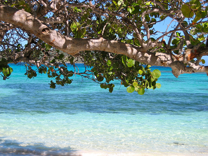barbados, caribbean, sea, beach