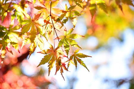 japan, landscape, natural, k, wood, autumn, plant