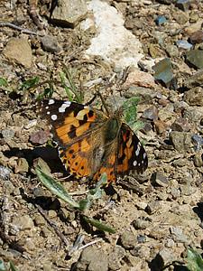 Distelvlinder, Vanesa van distels, vlinder, detail