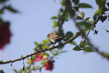 branch, bird, nature