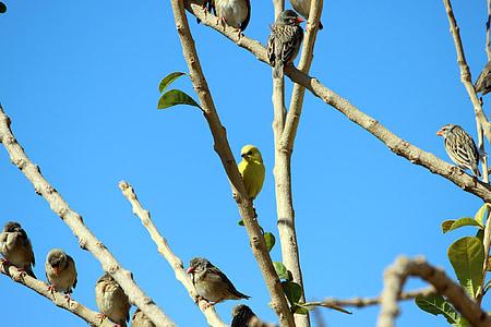 birds, branch, sky, morning