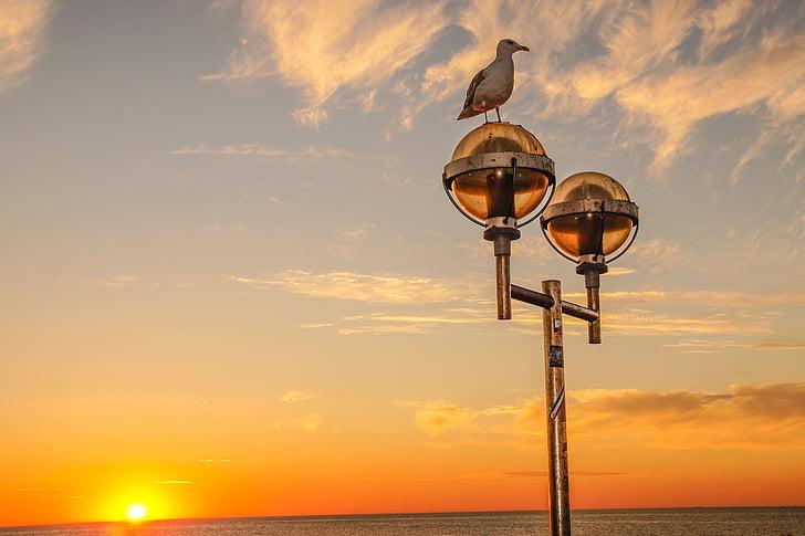 일몰, 바다, 저녁 하늘, 발트 해, abendstimmung, 갈매기, 로맨스