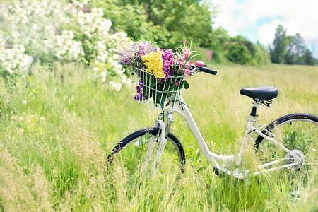 sykkel, eng, blomster, gresset, sykkel, våren, grønn