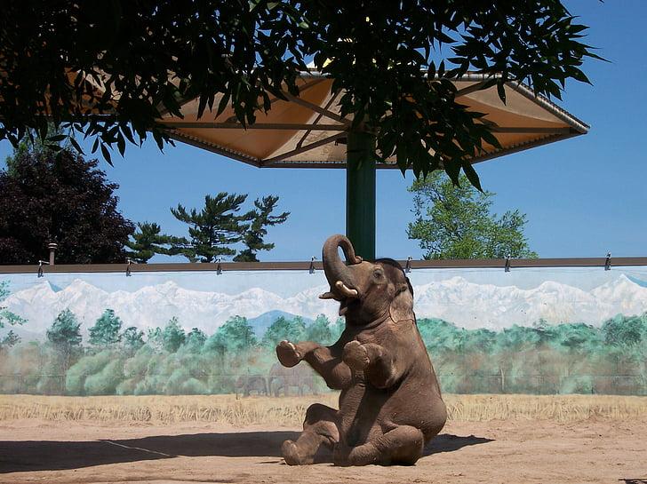 elephant, zoo, animal, zoo animals