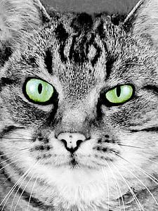 cat, cat' face, portrait, artistic, painting, feline, green eyes