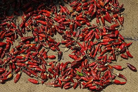 punane, tšilli, vürtsid, Aasia, toidu, terve, koostisosa