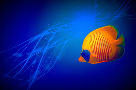 small fish, tropical, abstract, color, background, blue, desktop