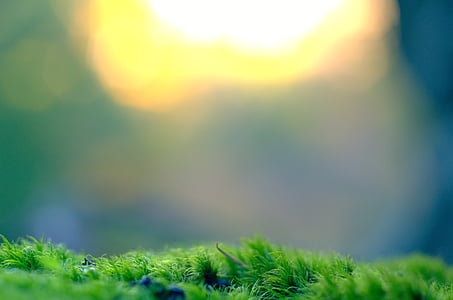 zamerané, fotografovanie, Zelená, tráva, Príroda, Zelená farba, rozostrenie