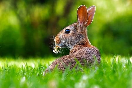 zec, zec, životinja, slatka, divan, travnjak, trava