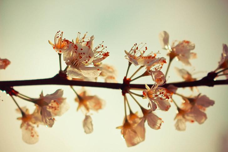 flor, primavera, temporades, natura, flor, arbre, jardí