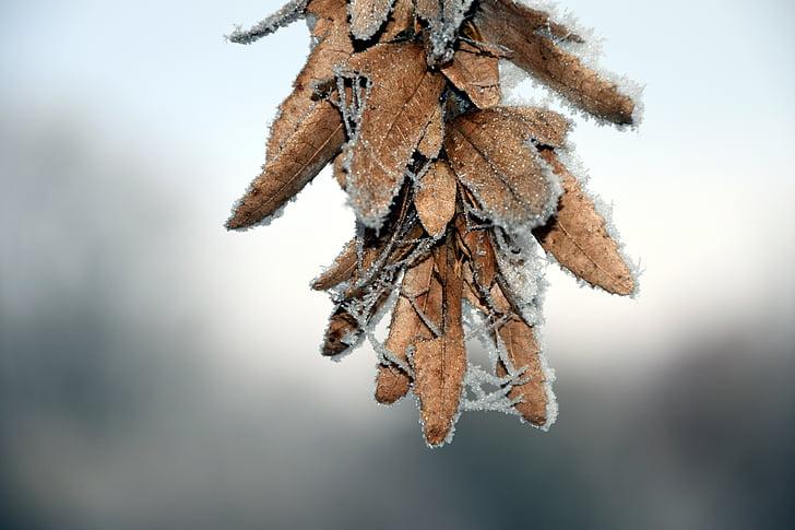 seemned, külm, Frost, eiskristalle, talvel, lumi, Sulgege