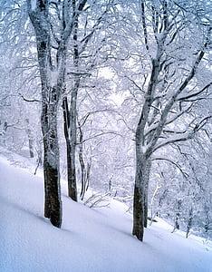 neve, floresta de faias, congelado, Shirakami-sanchi, Janeiro de, região de Património Mundial, Japão