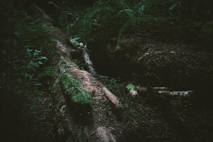 metsas, loodus, taimed, mustuse, pulgad, maa