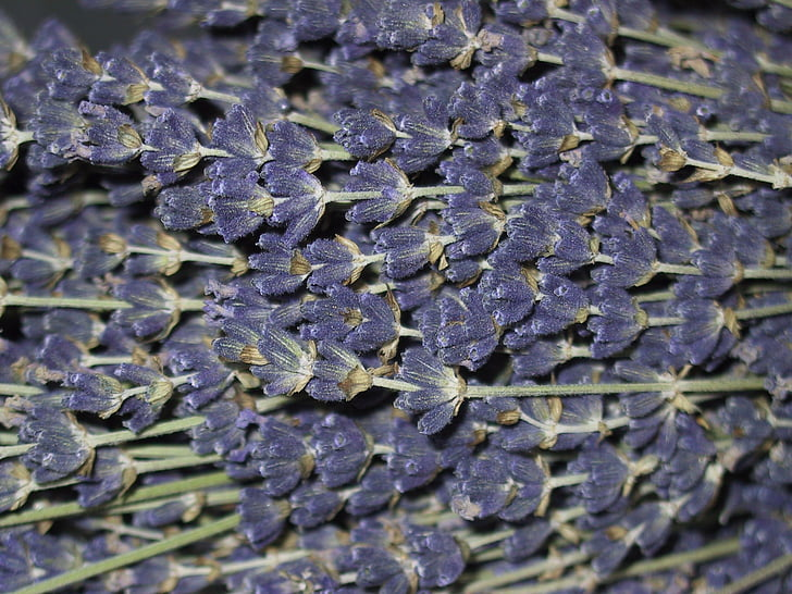 lavender, flowers, lavender flowers, scented plant, spice, inflorescence