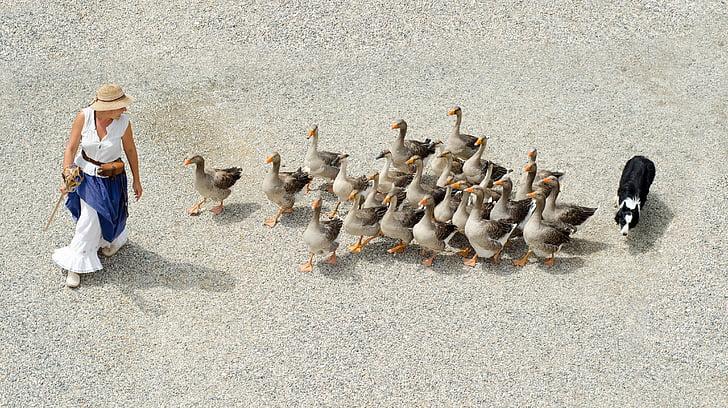 Ljudi i životinje - Page 17 Goose-geese-girl-dog-preview