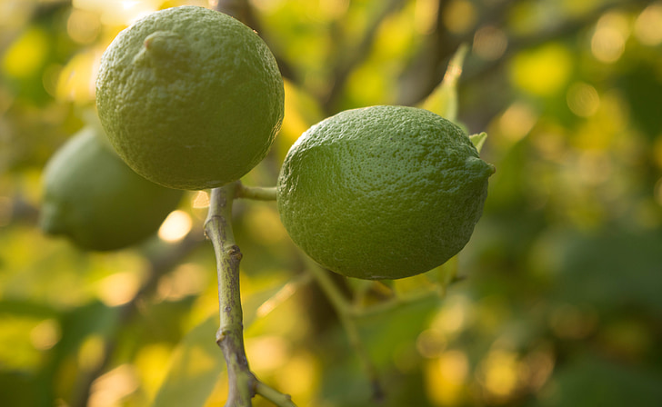 limes, nature, frais, vert, en bonne santé, alimentaire, fruits