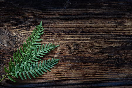 fern, small fern, green, plant, wood, brown, close