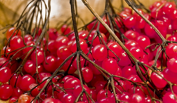baies, vermell, sobre, fruits d'hivern, rowanberries, baies de bola de neu, contra la tos