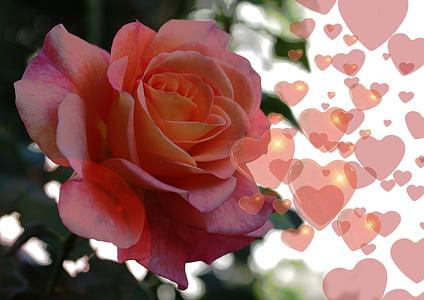 ruža, srce, ljubav, Sreća, Sažetak, odnos, flore