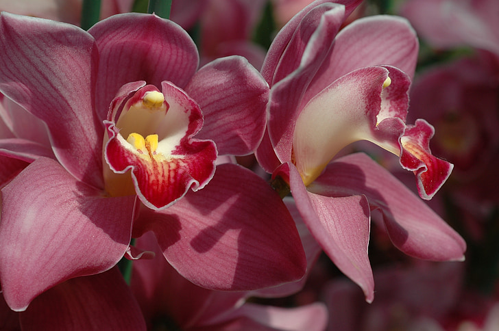 Cveće - Page 21 Orchid-flower-bloom-red-preview