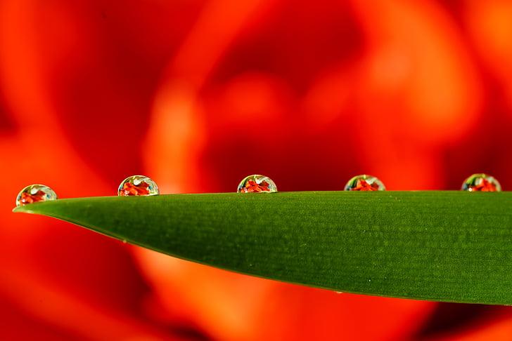 degoteig, comptes de llàgrima, perles, Bead, flor, reflectint, flor cau