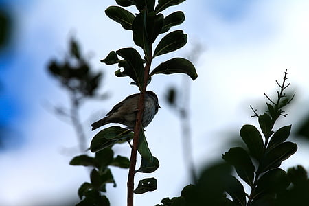 bird, birdie, life, dom, animal, ecology, nature