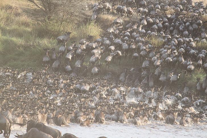 suuri muuttoliike, Afrikka, eläinten, Serengeti, Safari, Luonto