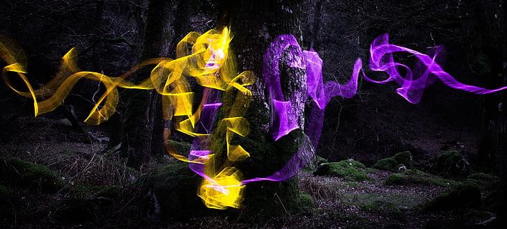트리, 빛, 천천히, 숲, 조 경, 자연, 밤