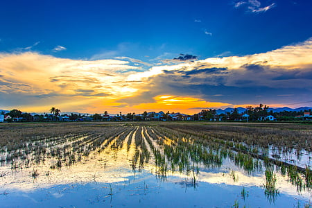 jordbruk, Dawn, skymning, fältet, hus, landskap, plakat