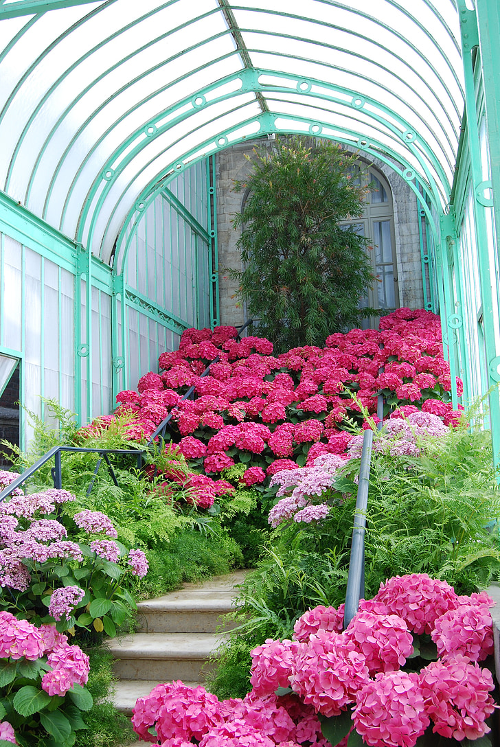 gradina, Rosa, turcoaz, flori, scara