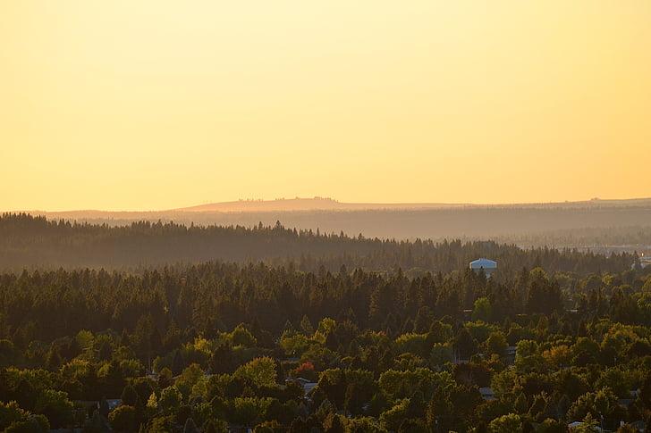 natureza, paisagem, floresta, colinas, Horizon, névoa, névoa
